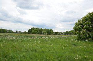 Mulbarton green